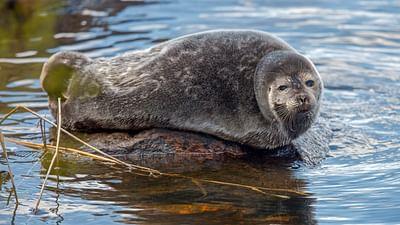 Skandinavien: Der Ruf der Natur