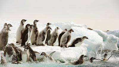 Antarktis - Die Reise der Pinguine