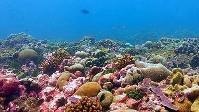 Die Rettung der Korallen