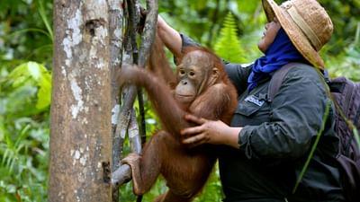 Arten retten - Gegen das große Verschwinden