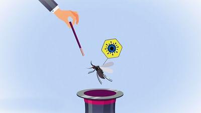 Genmanipulierte Mücken?
