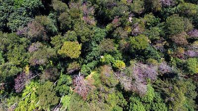 Deutschland: Waldsterben wegen Klimawandel