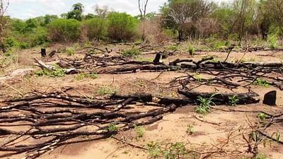 Illegaler Landhandel: Boliviens Wälder in Gefahr
