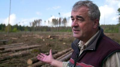 Wald in Not: Was hilft dem grünen Patienten?
