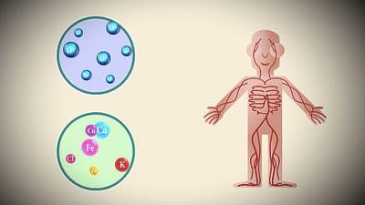 Woher kommt das Blut in unserem Körper?