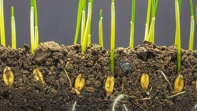 Biodiversität: Wie schützen wir unsere Böden?- Vox Pop