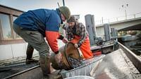 """Ein bedrohter Fisch auf Weltreise - in der Karibik geboren, in Europa beschützt, in Asien begehrt. Und deshalb Schmuggelware wie Drogen und Waffen. Die Webserie begibt sich auf die Spur der heißen Ware """"Baby-Aal"""", die sogenannten Glasaale."""