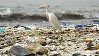 """Plastik ist überall. Laut Schätzungen werden jedes Jahr 8 Millionen Tonnen Plastik im Meer entsorgt. Im Atlantik, im Pazifik, im Indischen Ozean treiben ganze """"Kontinente"""" von Müll. Um dieser Bedrohung Herr zu werden, hat das Europäische Parlament am 26. März 2019 für ein Verkaufsverbot von Einwegplastik gestimmt. 2021 tritt das Plastikverbot in Kraft. Unser Dossier versammelt Analysen und Reportagen über die Plastikindustrie und mögliche Alternativen."""