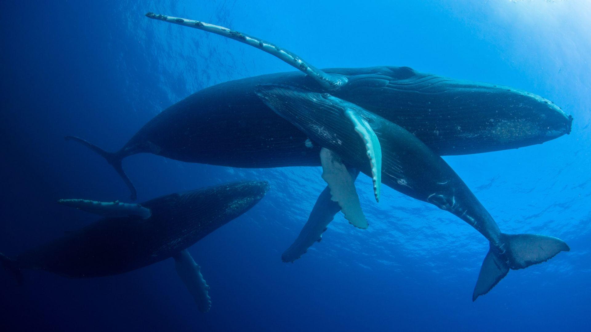 Ozeane in Gefahr