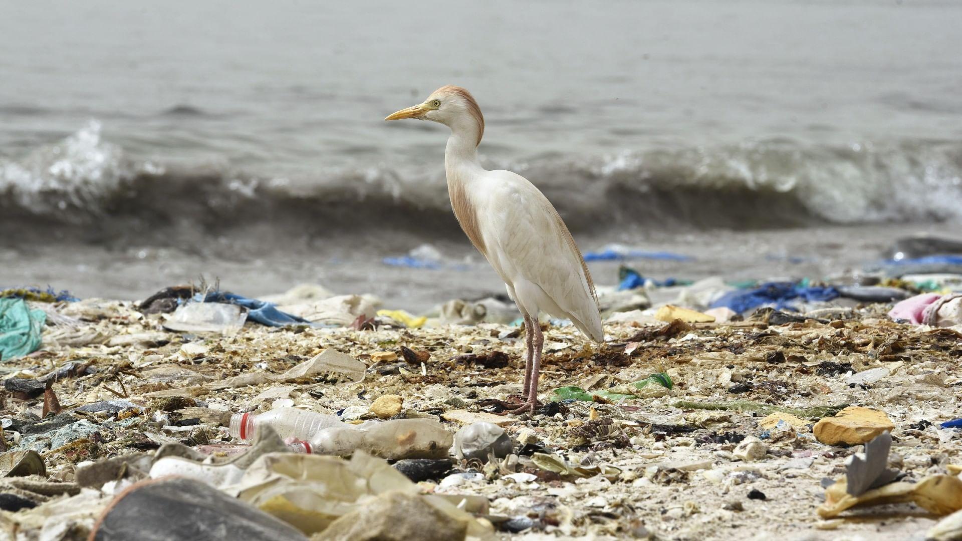 Die Verschmutzung der Meere