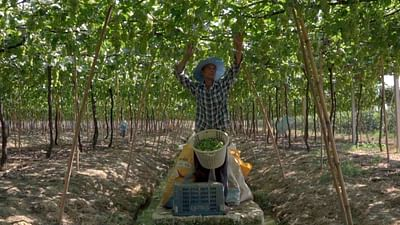 Thailand: Wine from the Tropics