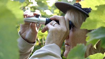 England: Buoyant Sparkling Wine