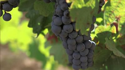 Spain: Long Traditions in La Rioja