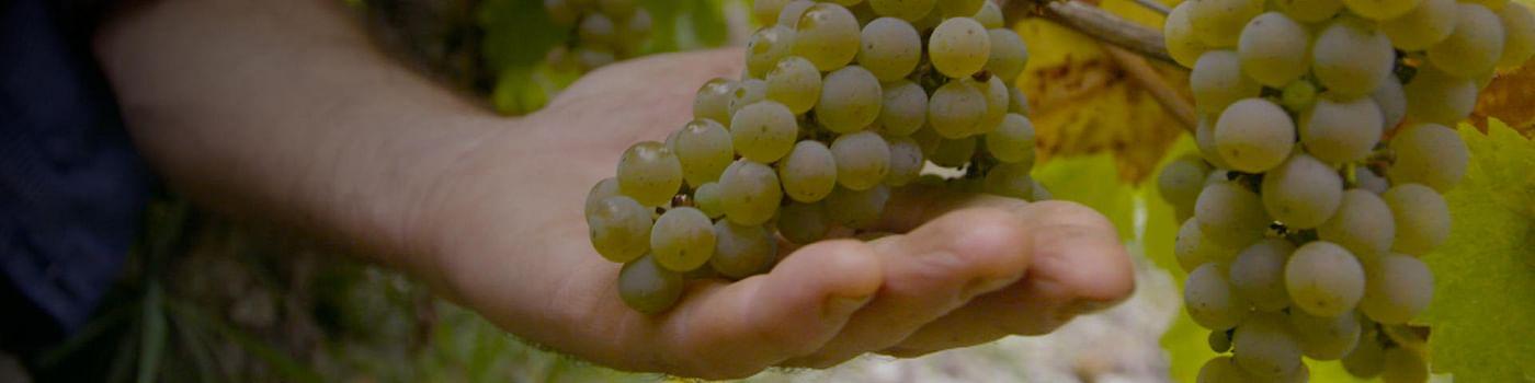 Worldwide Winemaking