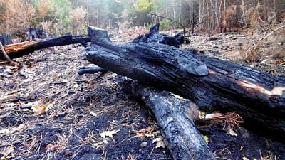 Francia: Cuando los árboles tienen sed, el bosque arde