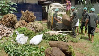 Le génie des plantes - En Inde