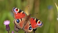 Enfants du soleil - les papillons en streaming