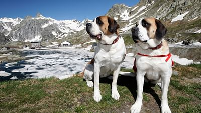 GEO Reportage - Saint-Bernard et ses chiens