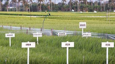 OGM - Mensonges et vérités