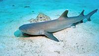Le triste sort des requins en streaming