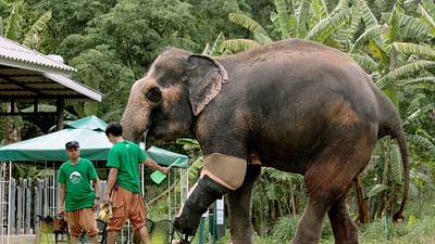 GEO Reportage - Thaïlande, l'hôpital des éléphants
