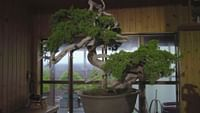 Histoires d'arbres en streaming
