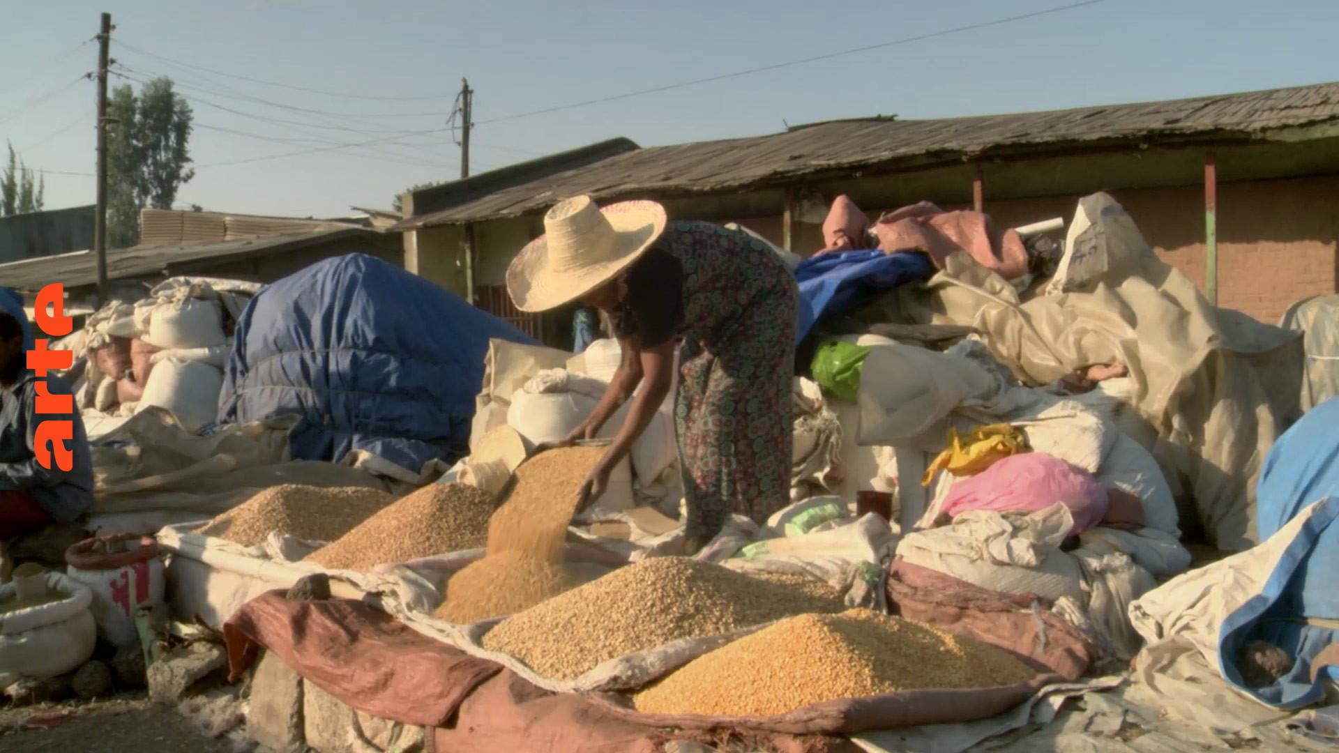 Le blé, une ressource vitale   ARTE