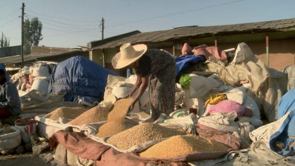 Le blé, une ressource vitale | ARTE