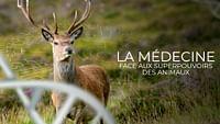 La médecine face aux superpouvoirs des animaux en streaming