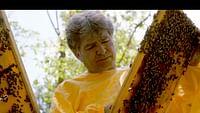 Les maîtres des abeilles du 09/07