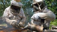 Les maîtres des abeilles du 12/07