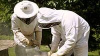 Les maîtres des abeilles du 15/07