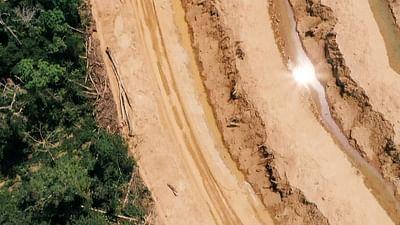 Dezoom - Le prix de la déforestation