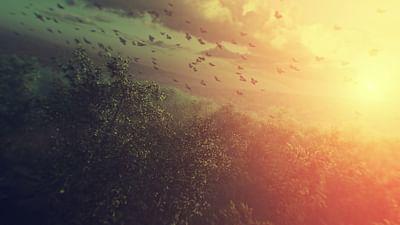 Une espèce à part - La feuille qui cache la forêt