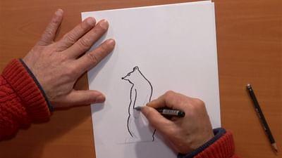 Cours de dessin : l'ours Barnabé