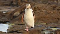 Geo reportage - nouvelle-zélande, les animaux du bout du monde en streaming