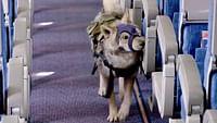 Geo reportage - moscou : les chiens renifleurs d'explosifs en streaming