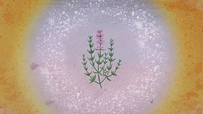 Chroniques végétales - Le thym commun