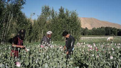 Afghanistan : enfant de l'exil