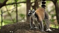 Madagascar, l?île rouge en streaming