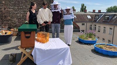 Xenius - Les abeilles, comment les sauver ?