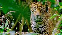 Costa rica - le réveil de la nature en streaming