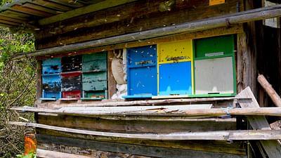 GEO Reportage - La Slovénie, le royaume des abeilles