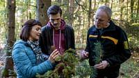 Xenius - des arbres menacés par le réchauffement climatique en streaming