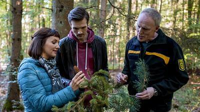 Xenius - Des arbres menacés par le réchauffement climatique