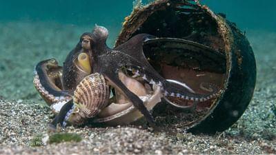Céphalopodes : le règne des ventouses