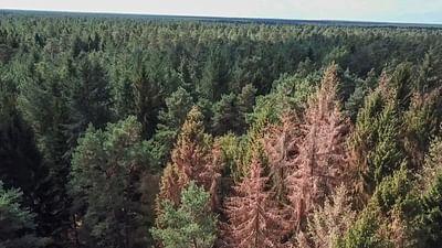 Sauvons nos forêts - Préserver le climat