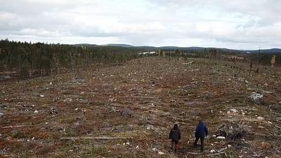 Sauvons nos forêts - Lutter contre l'industrie