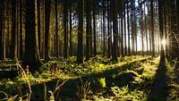 Le murmure de la forêt - quand les arbres parlent en streaming