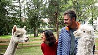 Revoir Xenius - talentueux alpagas : des animaux aux multiples vertus en streaming